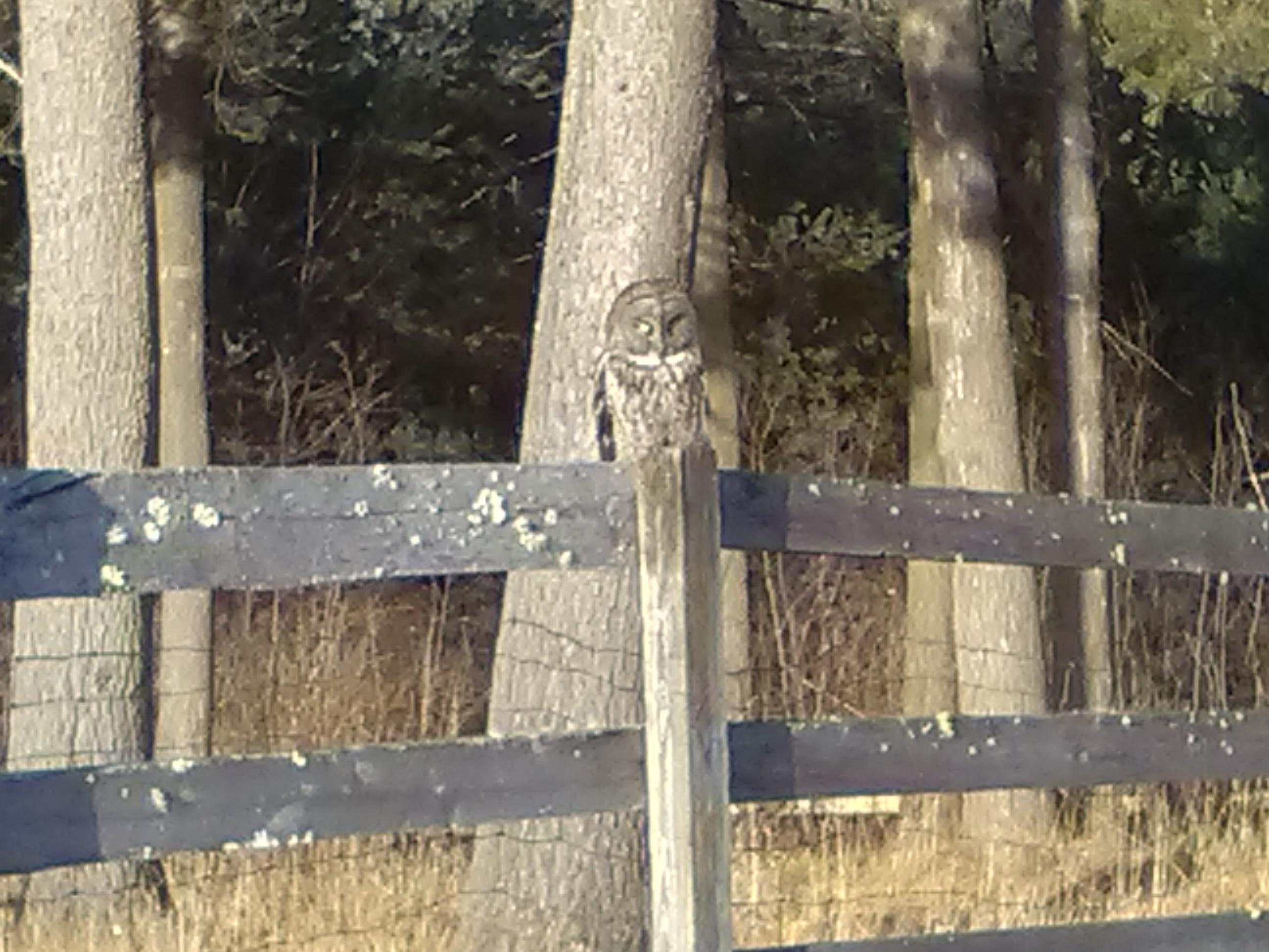 Random Road Trip Sightings – Rare Great Owl Newport, NH