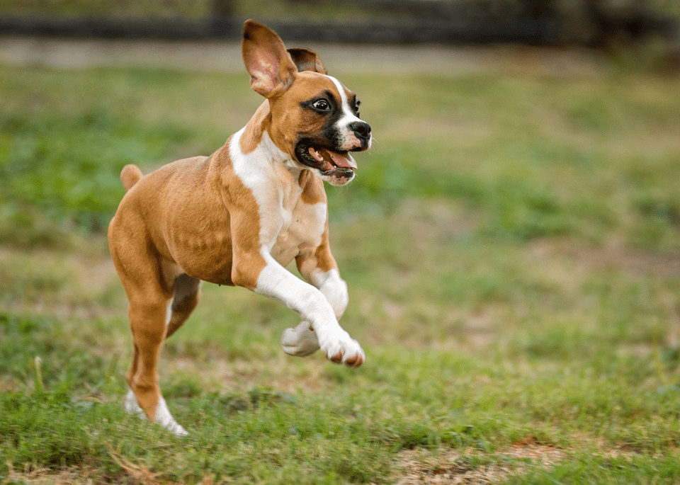 Dog Owner? These Dynamite Strategies Will Keep Your Vet Bills Down!