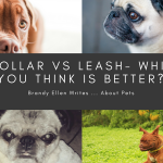 Dog Collar vs. Dog Harness: Which Is the Better Choice?