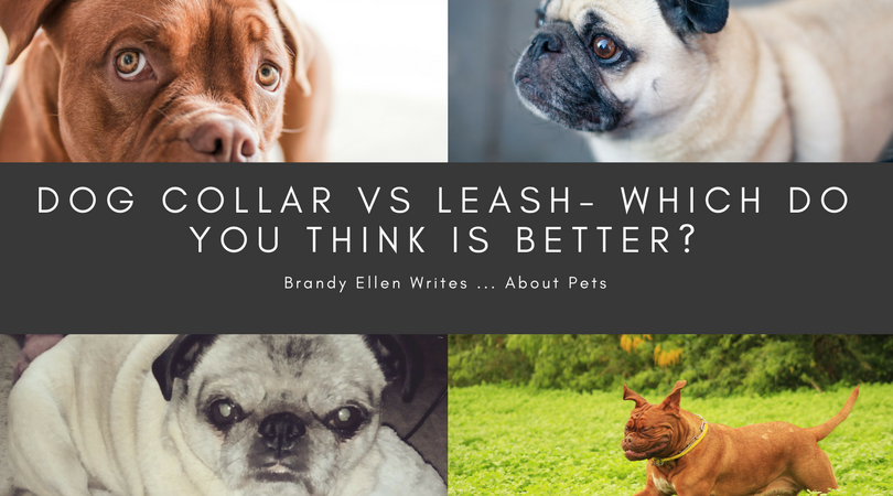 Dog Collar vs. Dog Harness