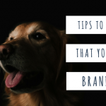 What Do You Need To Do To Keep Your Dog Healthy?