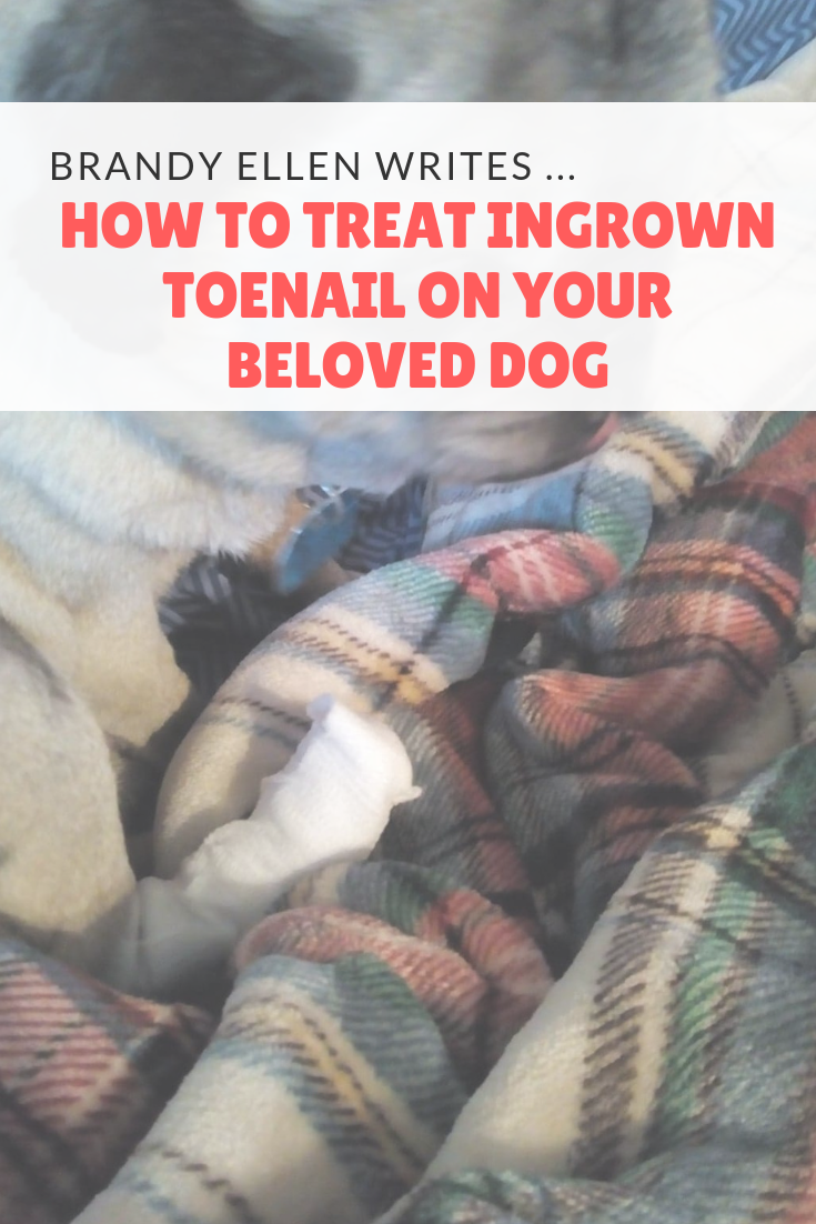 How to Treat Ingrown Toenail on Your Beloved Dog