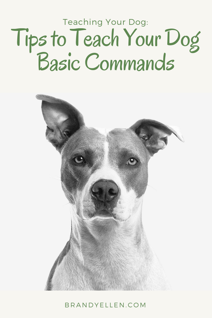 Tips to Teach Your Dog Basic Commands