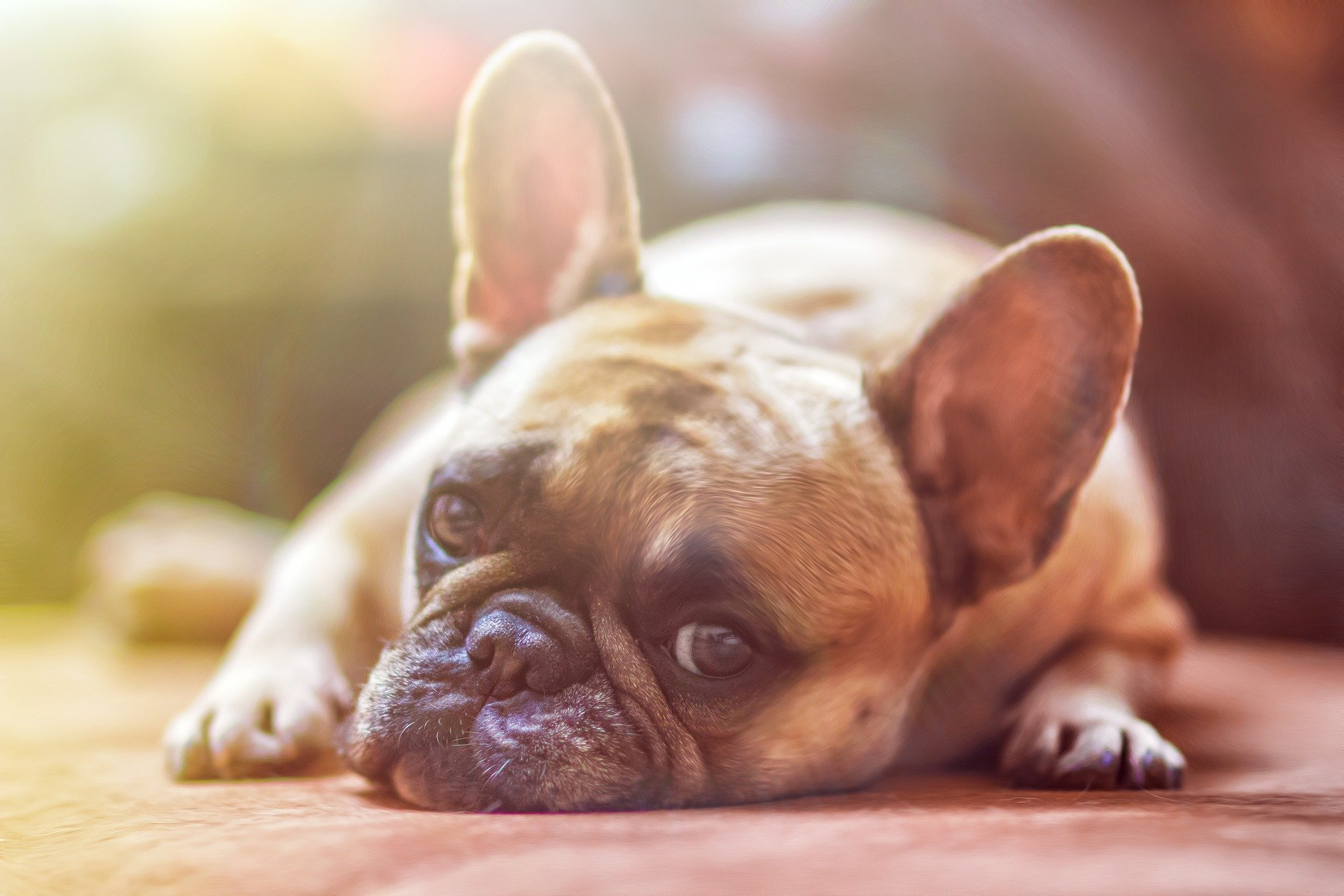 5 Tips to Keep your Doggy Happy