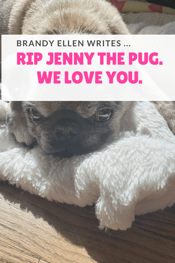 RIP Jenny the Pug - Your Memory Lives On