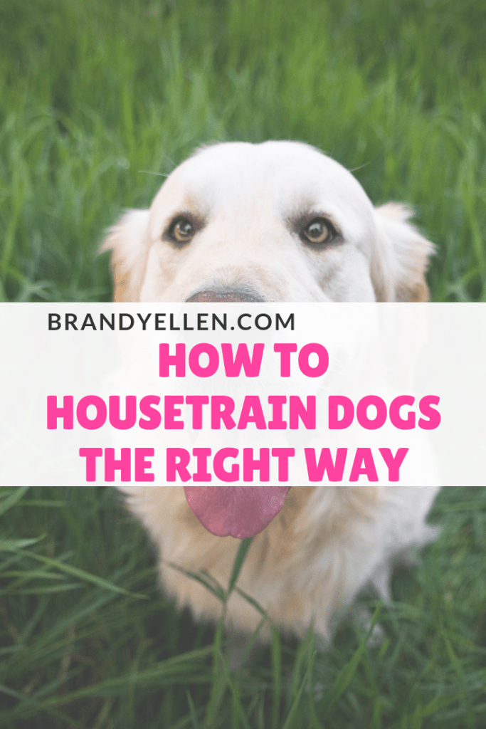 How to Housetrain Dogs the Right Way