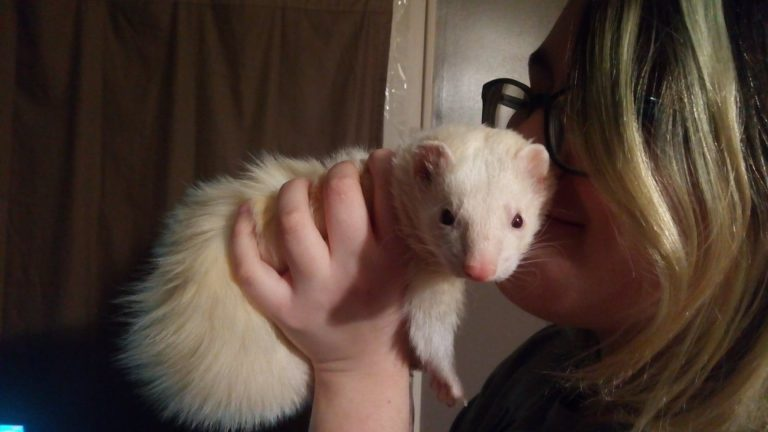 8 Great Benefits of Owning Ferrets