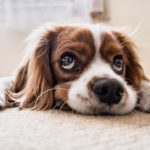 3 Tips for Moving With Your Dog