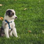 Why Getting A Puppy Is Great Training For Having A Baby